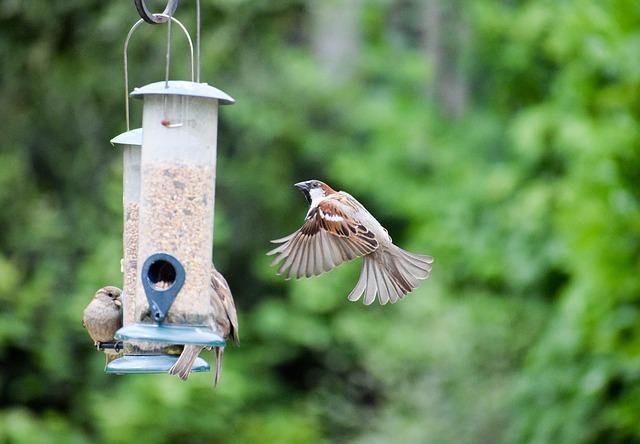 ptačí krmítko a ptáci